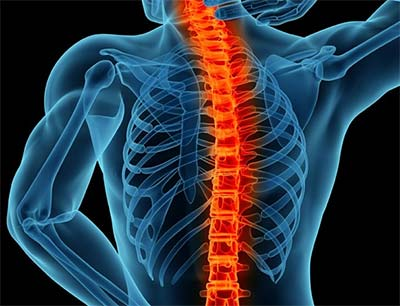 Lead Spinal Surgeon